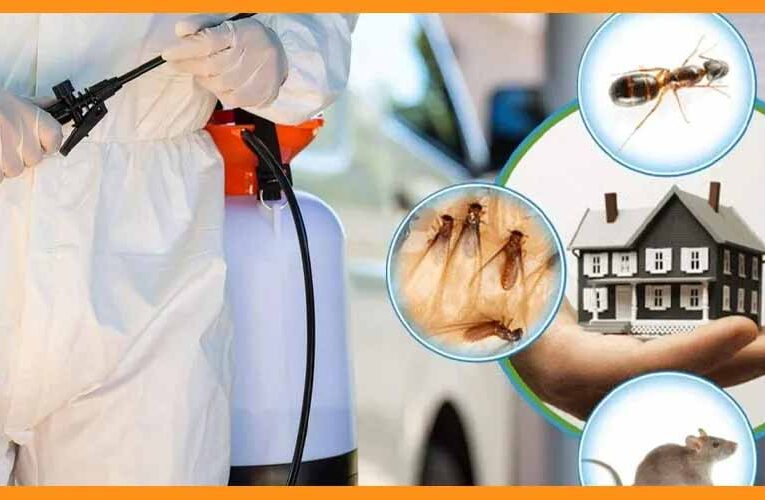 Pest Control Services Popular Way to Get Rid of Pests in Modern Era
